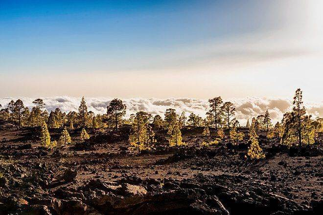 samostojatelnoe poseshhenie vulkana tejde v nacionalnom parke na tenerife 21 Самостоятельное посещение вулкана Тейде в Национальном парке на Тенерифе