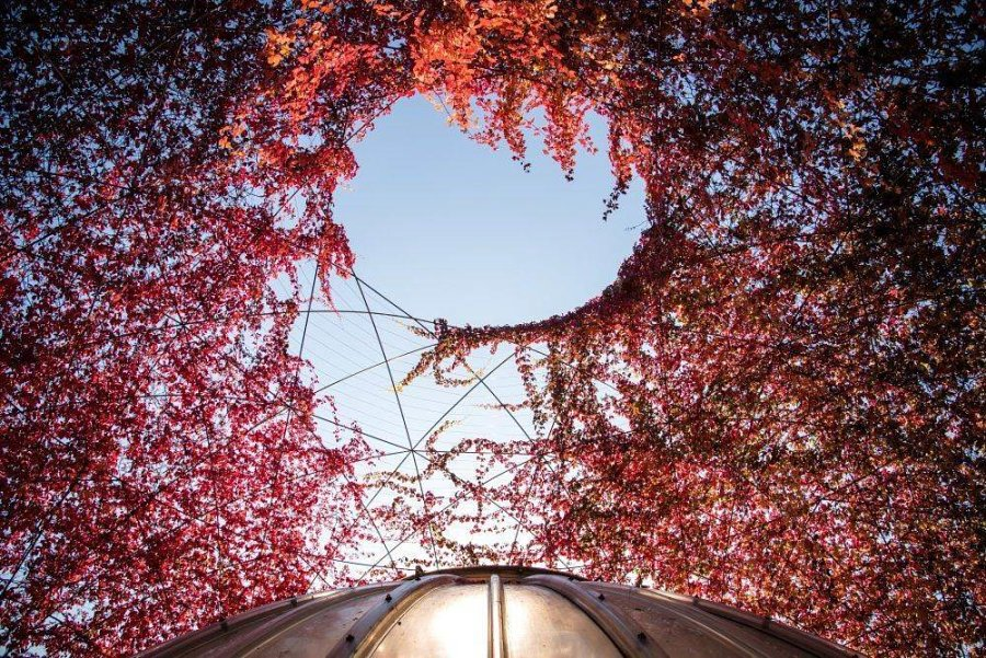 sad na kryshe biblioteki varshavskogo universiteta 14 900x601 Сад на крыше библиотеки Варшавского университета
