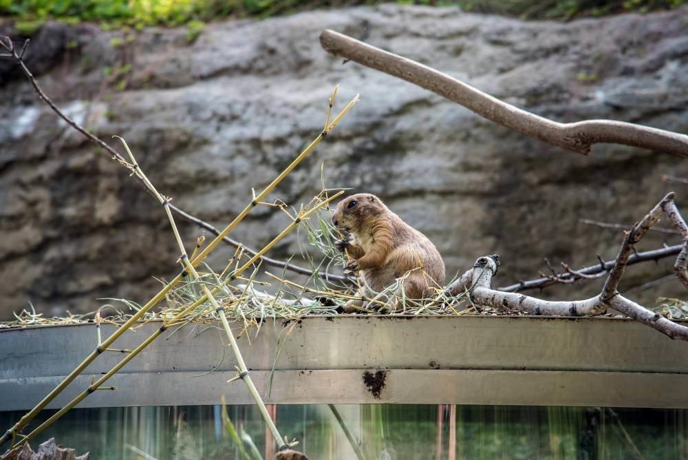 venskij zoopark shjonbrunn tiergarten schoenbrunn 12 Венский зоопарк Шёнбрунн (Tiergarten Schönbrunn)