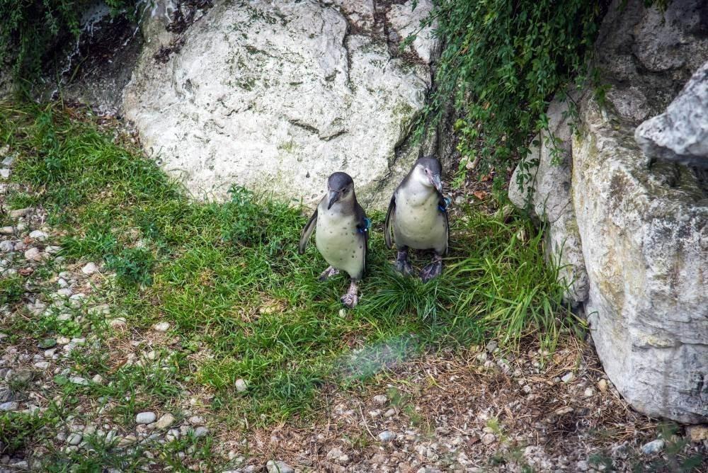 venskij zoopark shjonbrunn tiergarten schoenbrunn 18 Венский зоопарк Шёнбрунн (Tiergarten Schönbrunn)