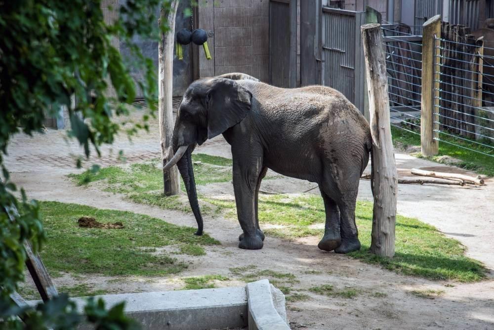 venskij zoopark shjonbrunn tiergarten schoenbrunn 19 Венский зоопарк Шёнбрунн (Tiergarten Schönbrunn)