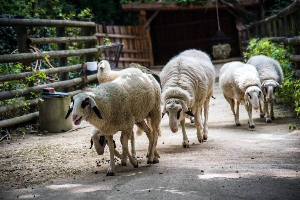 venskij zoopark shjonbrunn tiergarten schoenbrunn 21 Венский зоопарк Шёнбрунн (Tiergarten Schönbrunn)