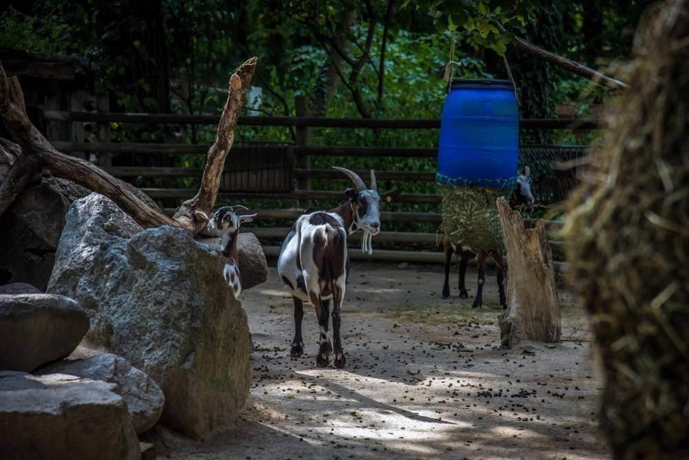 venskij zoopark shjonbrunn tiergarten schoenbrunn 5 Венский зоопарк Шёнбрунн (Tiergarten Schönbrunn)