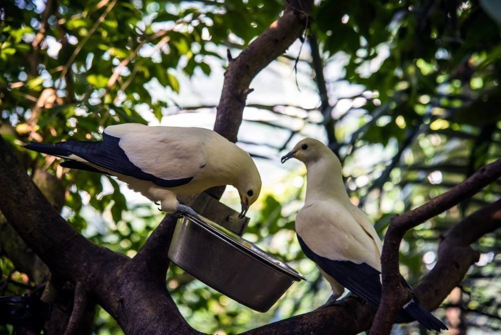 venskij zoopark shjonbrunn tiergarten schoenbrunn 7 Венский зоопарк Шёнбрунн (Tiergarten Schönbrunn)